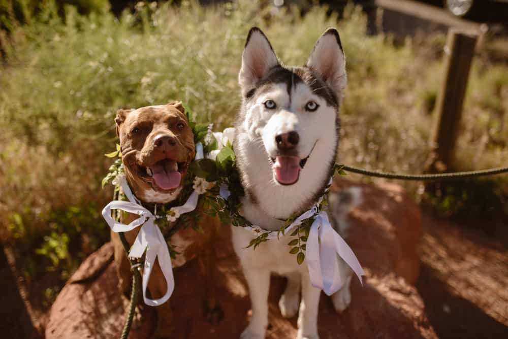 elopement-wedding-with-dogs